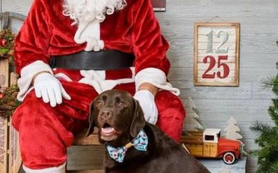 Holiday DIY Dog Bowtie Workshop