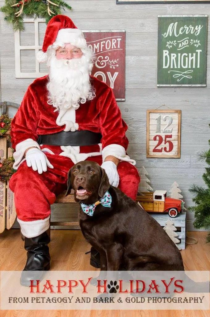 Holiday DIY Dog Bowtie Workshop with Popcraft