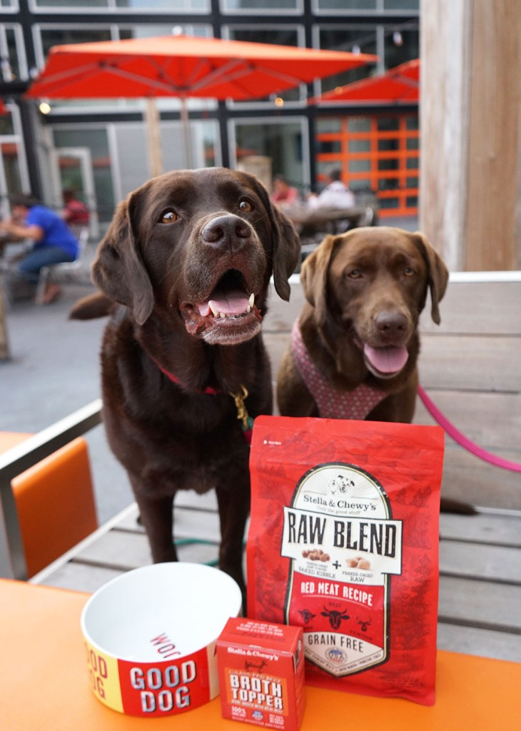 Switching To Stella and Chewy's Raw Blend Kibble