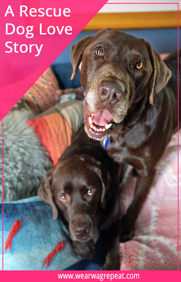 A Rescue Dog Love Story