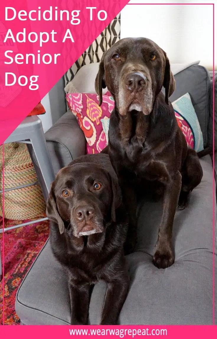 Deciding to Adopt a Senior Dog