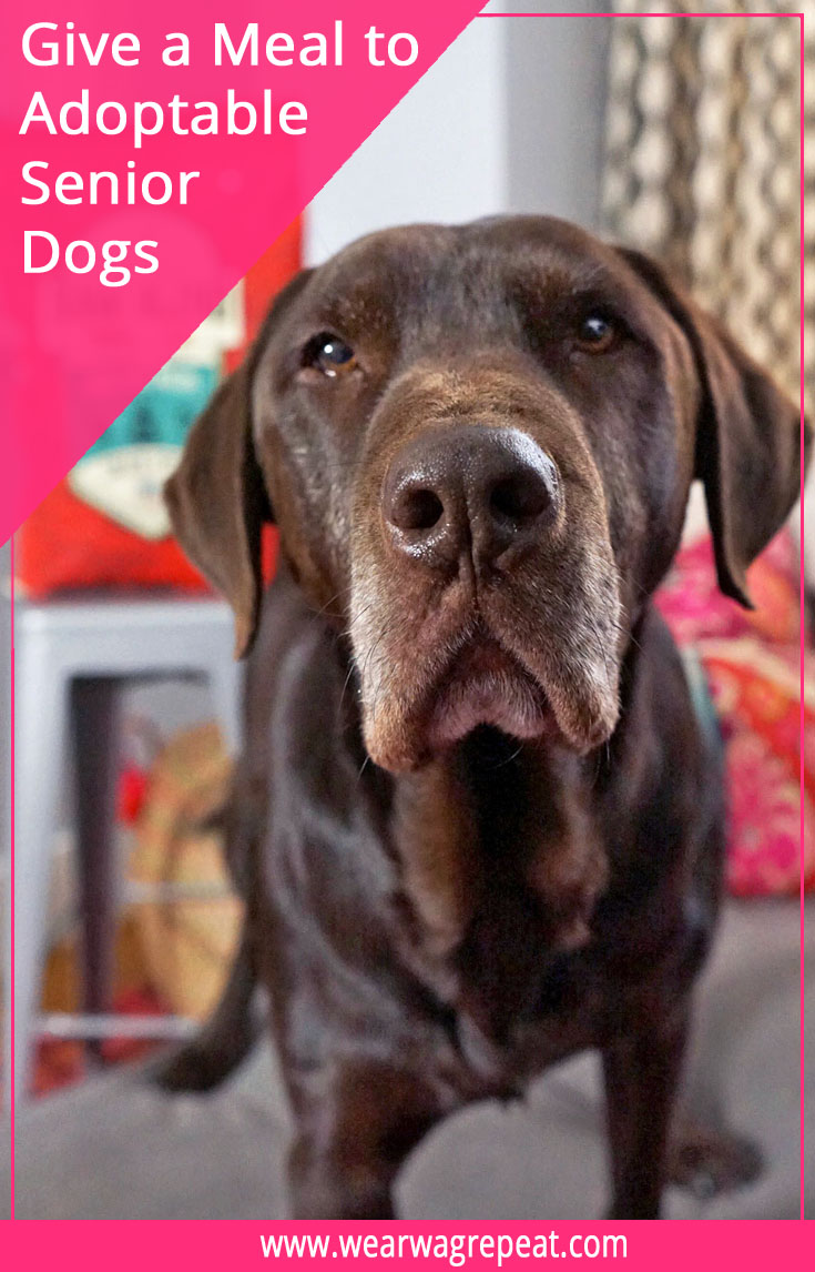 Journey Home Fund - Give a meal to adoptable senior dogs