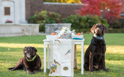 Sophisticated Dog Birthday Party Styled Photoshoot