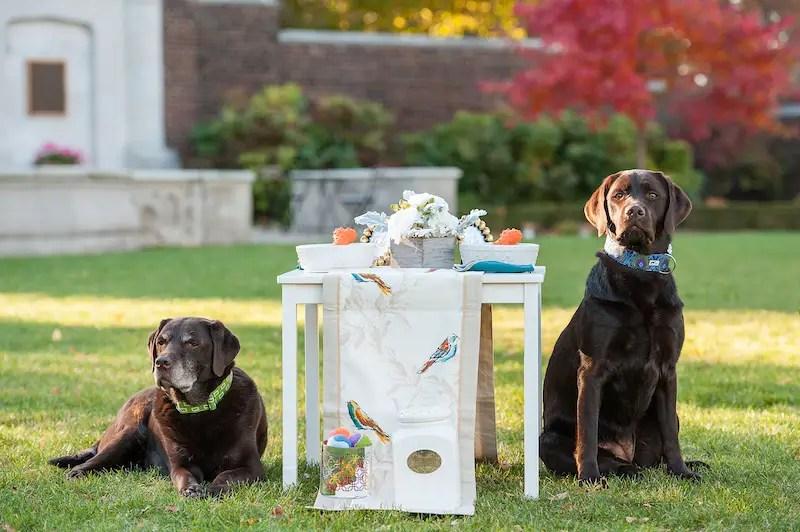 Sophisticated Dog Birthday Party Styled Photoshoot