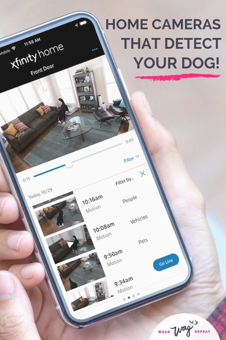 Home Cameras That Detect Your Dog