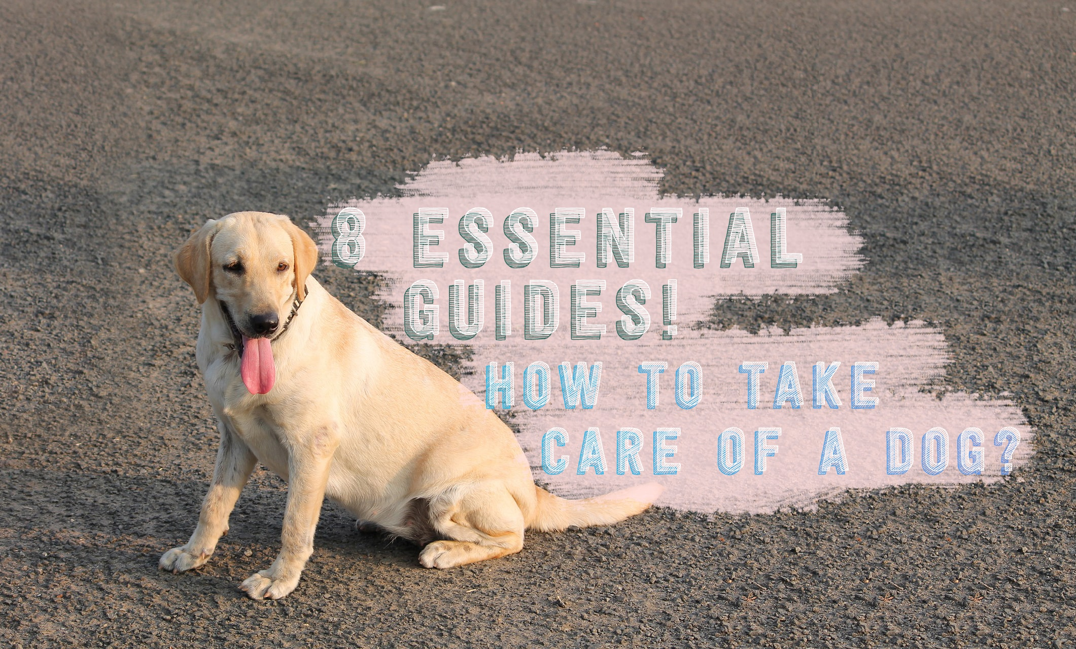 Know How to take care of a dog with these Eight Essentials