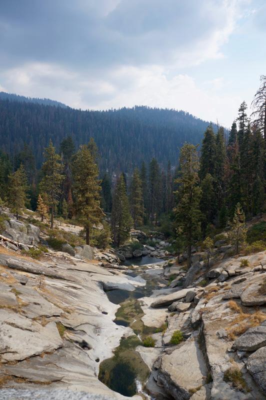 06_Sequoia