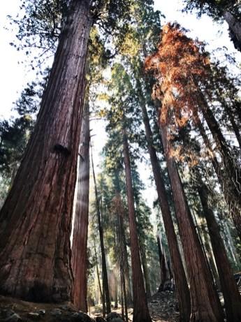 Sequoia National Park, San Francisco