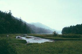 How Do Wetlands Prevent Flooding?