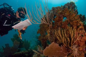 Scientist studying coral