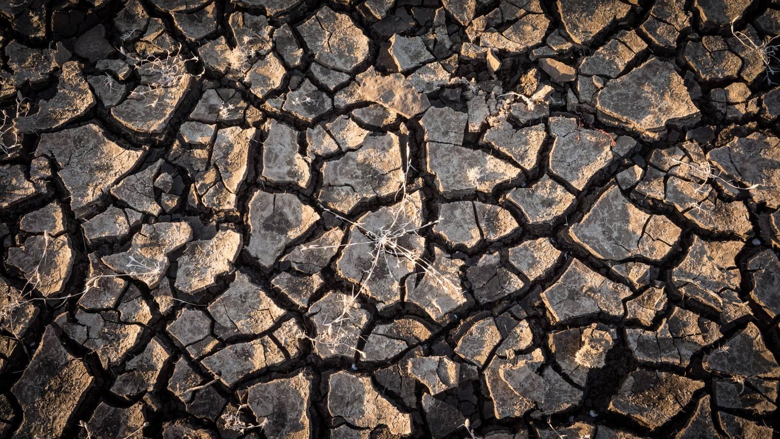 Cracked, dry soil in San Luis Reservoir, January 2014. Photo courtesy of Jason Liske.