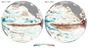 Present sea surface height anomalies are similar in magnitude to those in 1997, but with greater aerial extent. (NASA)