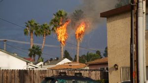 Palm trees in San Diego burst into flames after being struck by lightning during a wild thunderstorm in midst of record heat wave. Photo by Kit Corey.