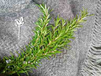 Silver Gotland w Rosemary and pin