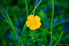 wpid-web-done.de-Yellow-Flower-_MG_6229.jpg