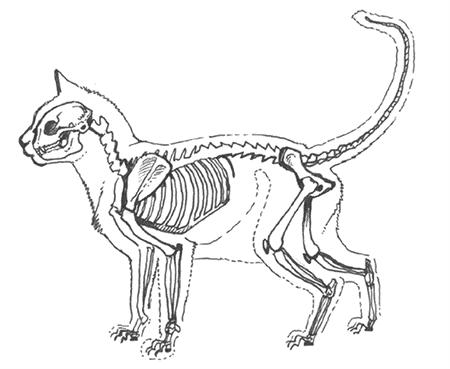 해골 고양이