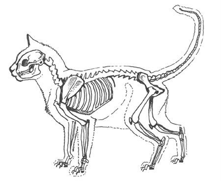 Skeleton cats