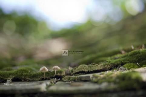 AGRfoto_5D_7026