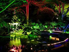 Lighting on Wellington Botanical Gardens Pond at Night