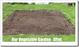 veggie garden after