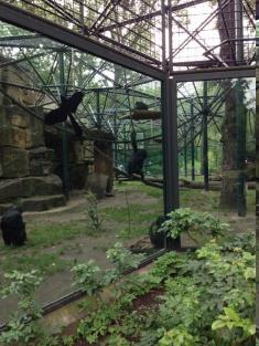 berlin_zoo