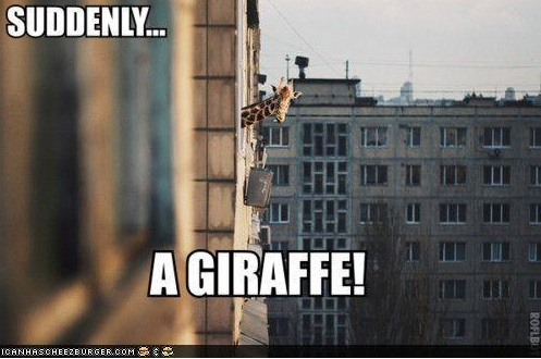 suddenly a giraffe