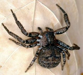 A crab spider from South Carolina, USA.