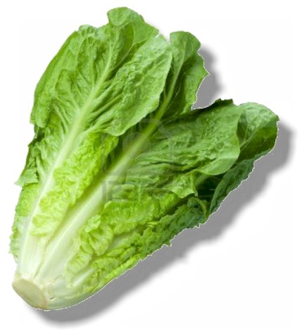 lettuce-first