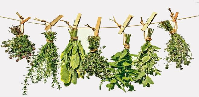 herbs31