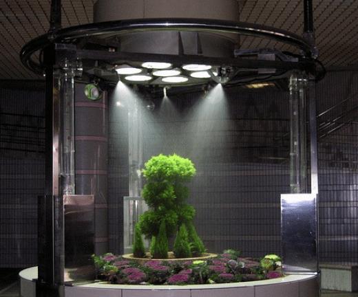 garden indoor 3