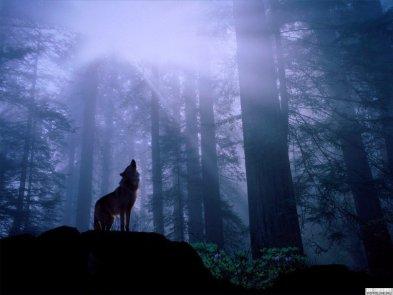 wolves_howl-02
