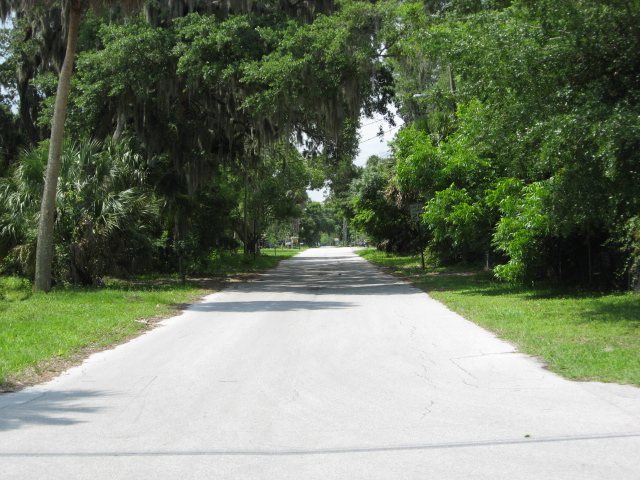 Image: Tree canopy covered street