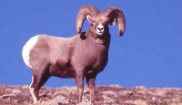 Physical Characteristics of The RAMS