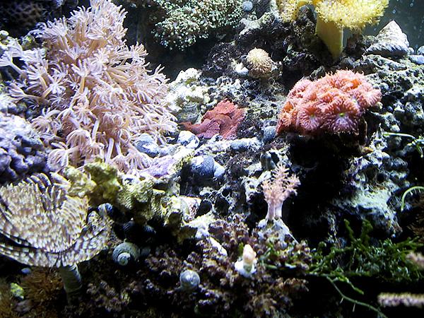 Nerite snails in an aquarium