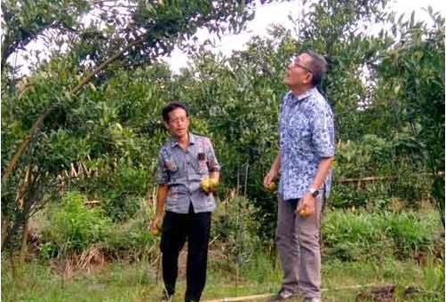 MAJUKAN DESA WISATA: Prof Dr. Yupono, M.S., CHRP ketika melakukan pembinaan terhadap petani di Desa Wisata Petik Jeruk, Selorejo, Kecamatan Dau