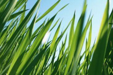 Te pricepi la cosit iarba? Angajeaza-te in Austria, pentru 1.100 de euro pe luna