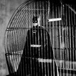 Las Aventuras de una figura de acción de Batman - Imágenes - 119