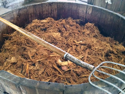 Mexicanos crean plástico con bacteria desechos del agave tequilero - bacteria-desechos-tequila-plastico