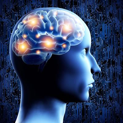 """partes del cerebro Diseñan un sistema que """"interroga"""" y muestra cómo reaprende el cerebro"""