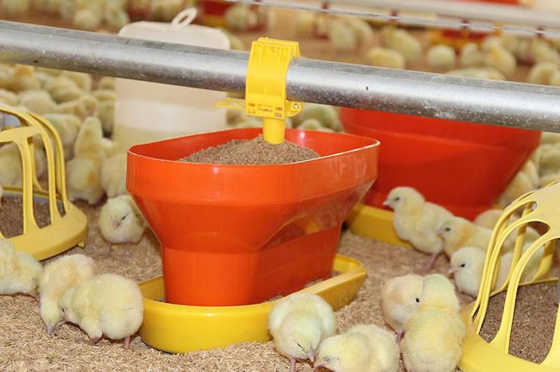 Comedero Sephnos Incrementan productividad en granjas y ganan premio de tecnología