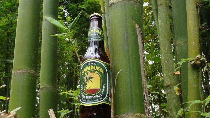 Bambusa, la cerveza de bambú creada por un mexicano - cerveza-mexicana-de-bambu-bambusa