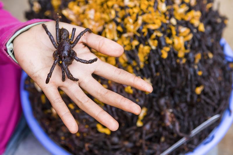 Las comidas terroríficas del mundo ¿Te atreverías a probarlas? - Comidas-Terrorificas-Tarantulas-Fritas