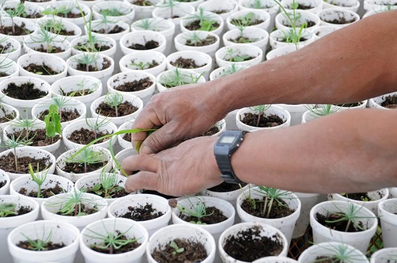 México cuenta con el programa de restauración ecológica más importante en el mundo - Programa-nacional-de-reforestacion