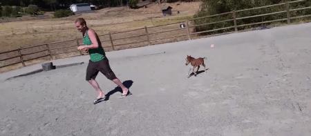 YouTube: Conoce a Sammy, un tierno caballo de apenas 60 cm