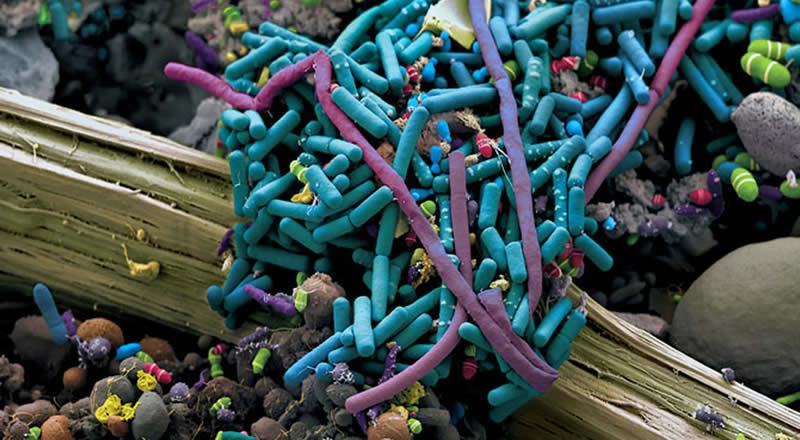 Logra UNAM membrana capaz de detectar organismos causantes de problemas intestinales - Microorganismos