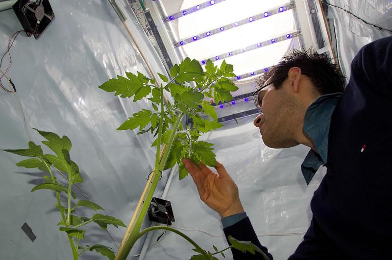 ¿Cómo se comportarían las plantas en la Luna y Marte? Un mexicano trabaja en averiguarlo - Plantas-en-la-luna-y-marte