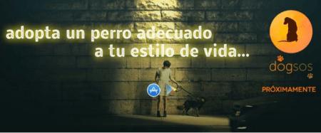 Dogsos, app mexicana que conectará protectoras y adoptantes de perros
