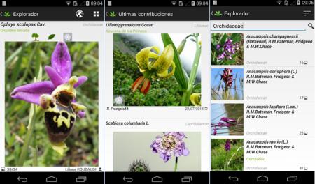 Crean un «Shazam» para identificar todo tipo de plantas