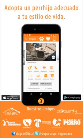 Dogsos, aplicación que busca fomentar la adopción canina