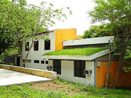 Crean techos verdes que disminuyen temperatura de las casas en zonas de extremo calor